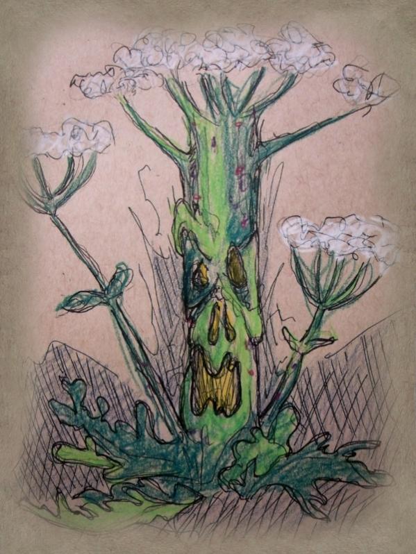 Giant Hogsweed